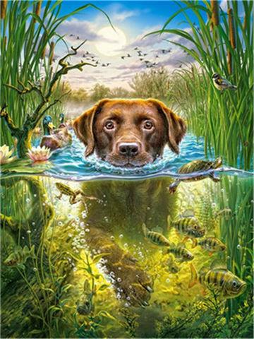 Картина раскраска по номерам 30x40 Собачий заплыв