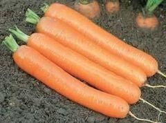 Дордонь F1 семена моркови нантской (Syngenta / Сингента)