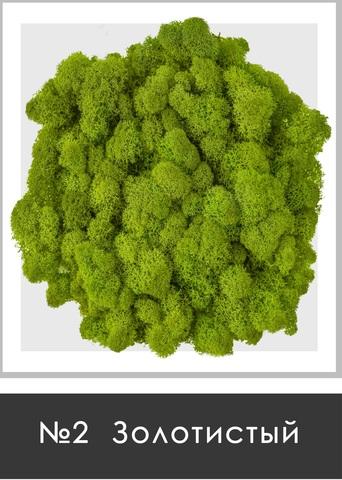 Стабилизированный мох (ягель) цвет №2 Золотистый