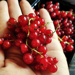 Смородина красная свежая / 500 гр