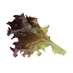 Росало семена салата лолло росса (Enza Zaden / Энза Заден)
