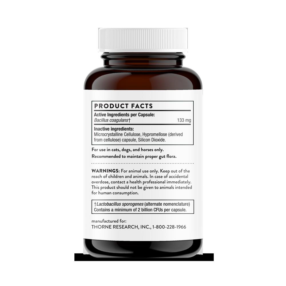 bacillus-coagulansvet-3