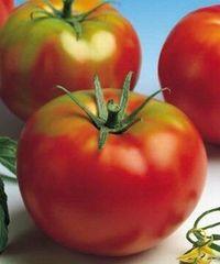 Арлетта F1 семена томата индетерминантного (Seminis / Семинис)