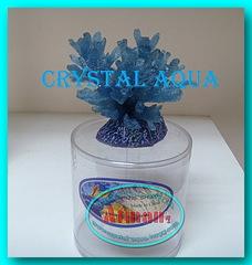 Актинии SH 066-1, коралл
