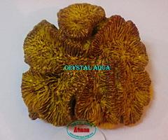 Актинии SH 090-1, коралл