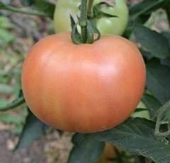 Семена томата Алези F1, Vilmorin, 5 шт.