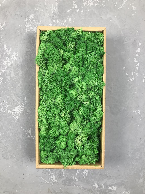 Мох ягель стабилизированный зелёный 500 гр