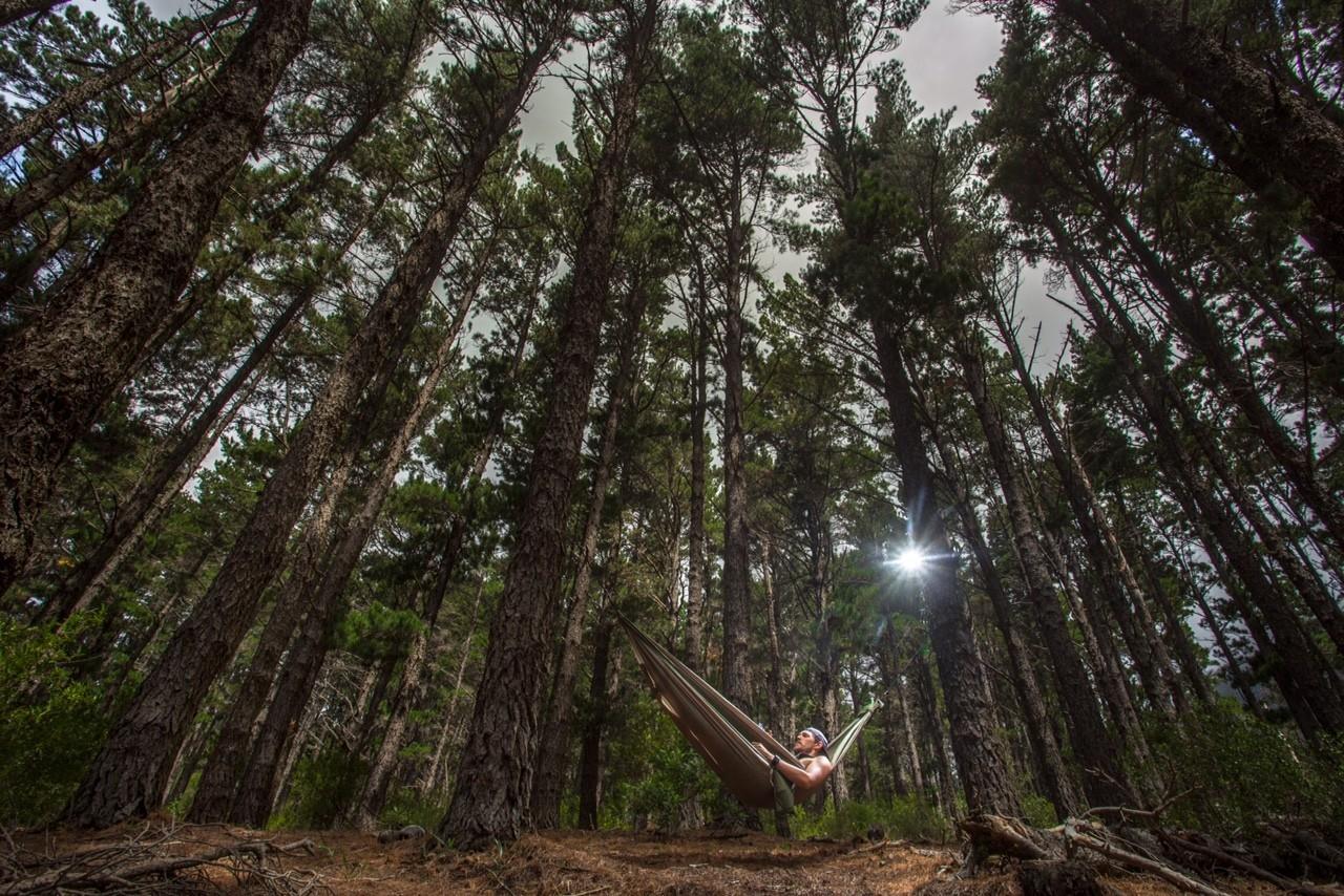 Гамак в сосновом лесу.