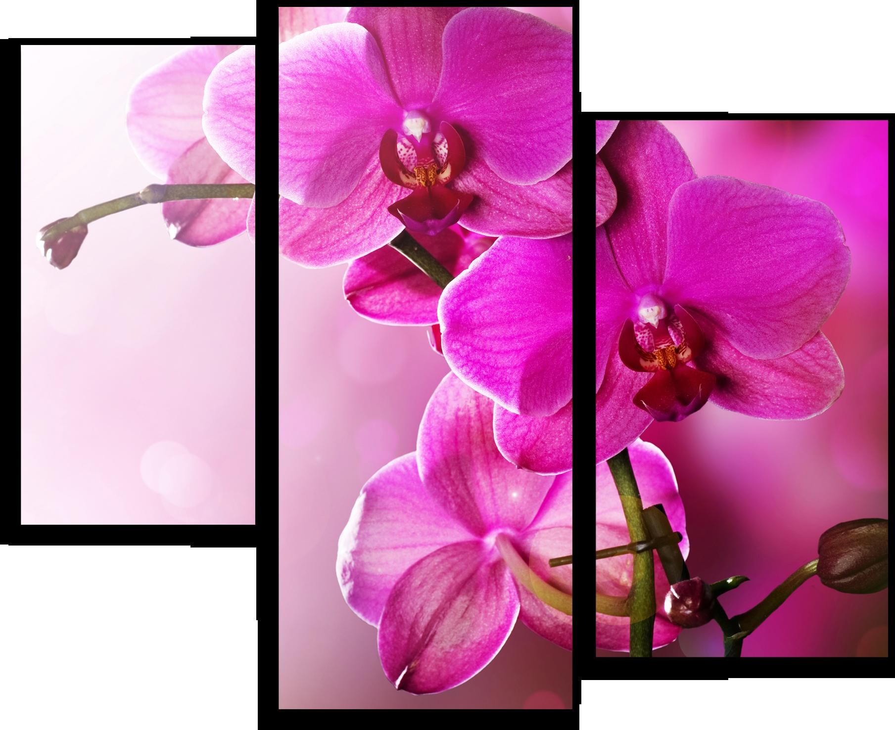 """Цветы Модульная картина """"Цветение орхидеи"""" М670.png"""