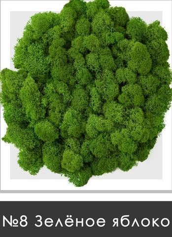 Стабилизированный мох (ягель) цвет №8 Зеленое яблоко