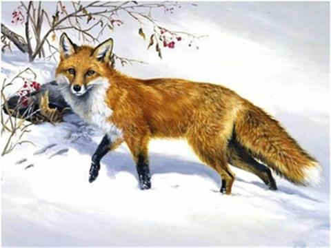 Картина раскраска по номерам 30x40 Лиса в снегу
