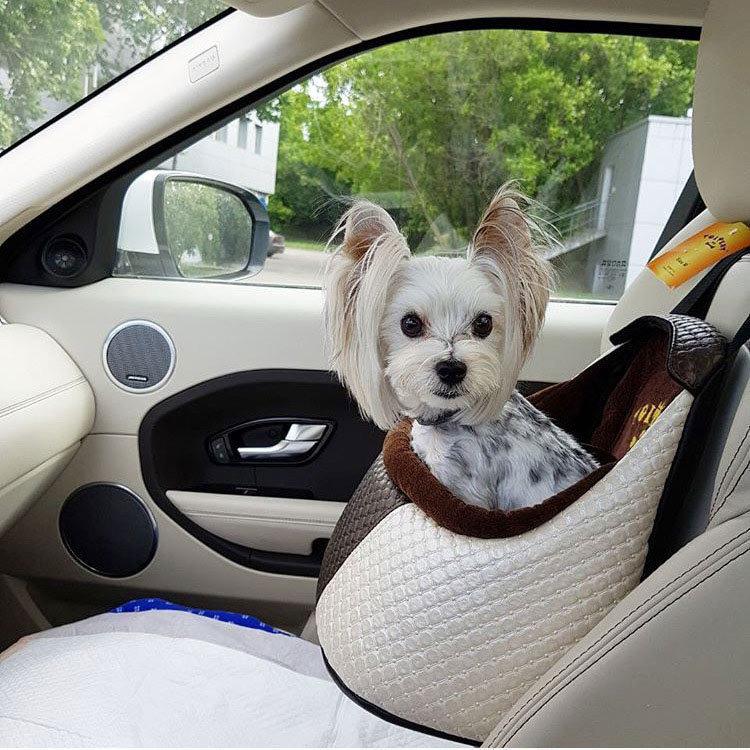 Автомобильное кресло для собак