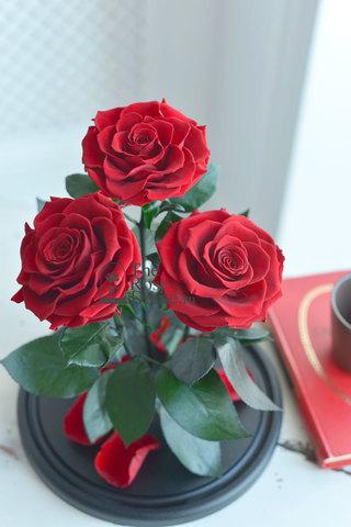 Роза Трио ХИТ Оптом Выс*Диам*Бутон (32*22*3х12см) Цвет бордовая