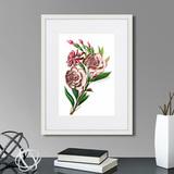 Марк Кейтсби - Caribian Flora Pink Gardenia Flower Branch, 1740г.