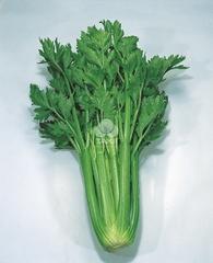 Дарклет F1 семена сельдерея (Takii / Таки)