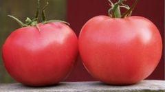 Афен F1 семена томата индетерминантного (Clause / Клос)