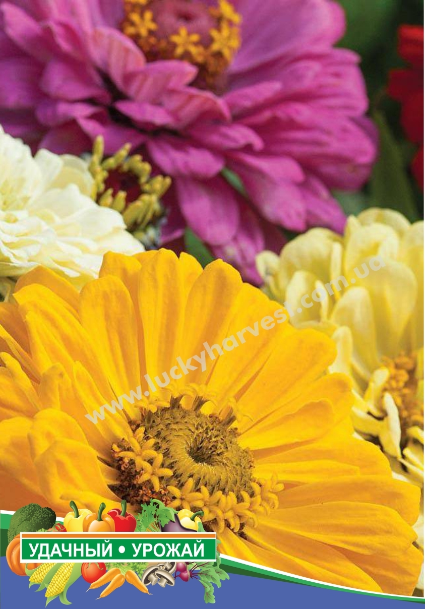 Семена циннии крупноцветковой