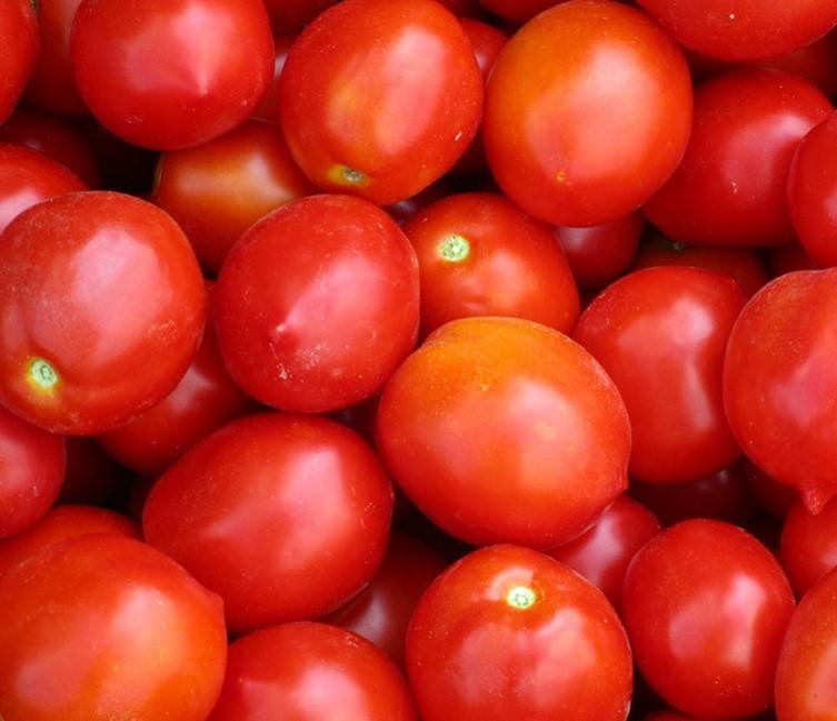Каталог Роксет семена томата детерминантного (Гавриш) роксет.jpg