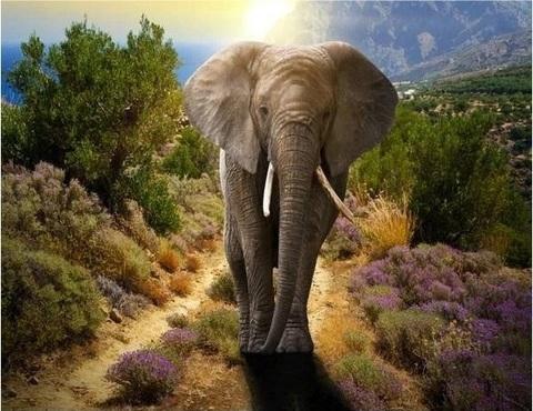 Картина раскраска по номерам 40x50 Слон на рассвете (арт. RA3205)