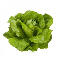 Викторинус семена салата ромэн (Rijk Zwaan / Райк Цваан)
