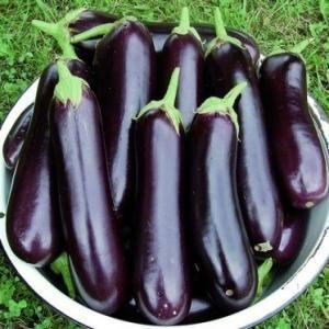 Баклажан Рома F1 семена баклажана (Sakata / Саката) Рома_семена_овощей_оптом.jpeg