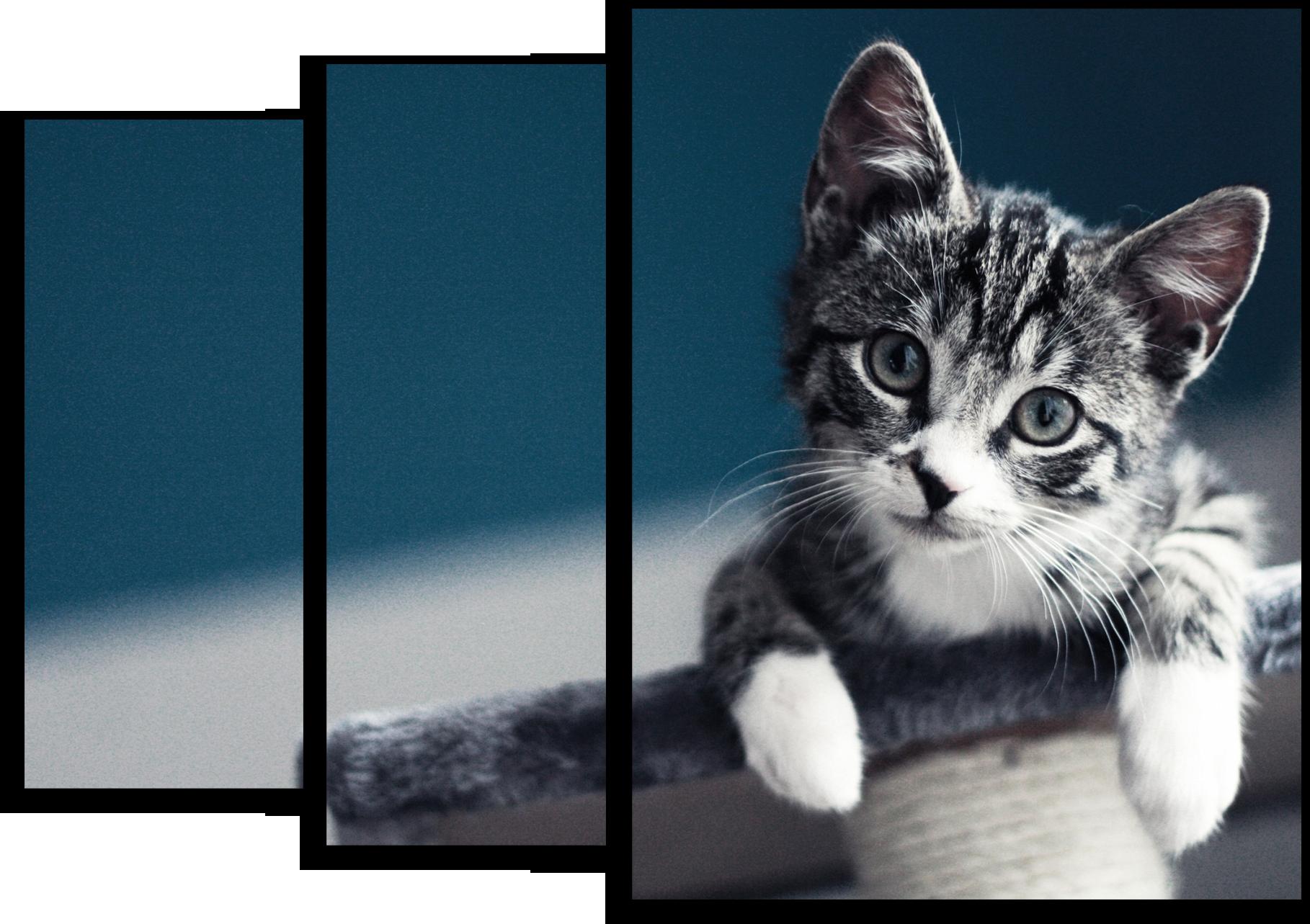 """Животные Модульная картина """"Ласковый котёнок"""" М557.png"""