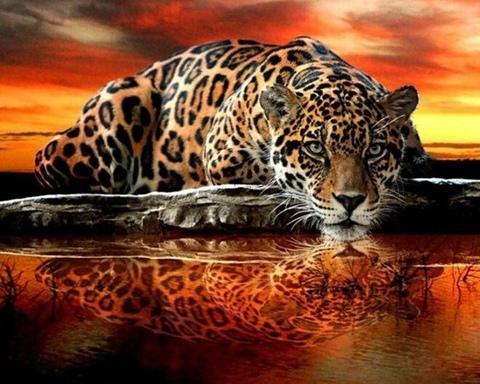 Алмазная Мозаика 20x30 Леопард и его отражение (арт. MTC3367)