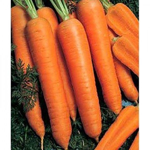Bejo Камаран F1 семена моркови курода/шантане (Bejo / Бейо) Камаран_F1_семена_овощей_оптом.jpg