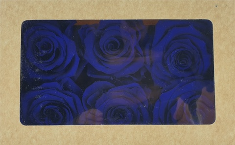 Стабилизированный Бутон Розы Optimum Flowers Standart . Цвет Синие Азур (Диаметр 7см)