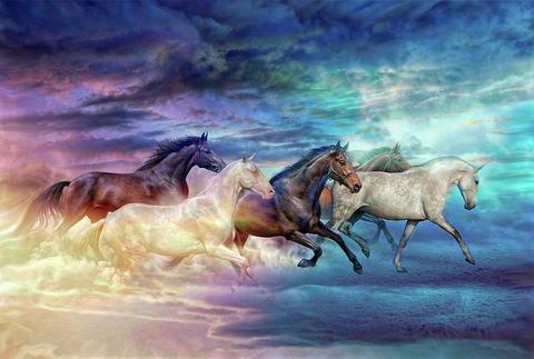 Картина раскраска по номерам 30x40 Забег разноцветных лошадей