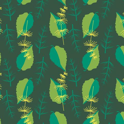 Двухцветные листья