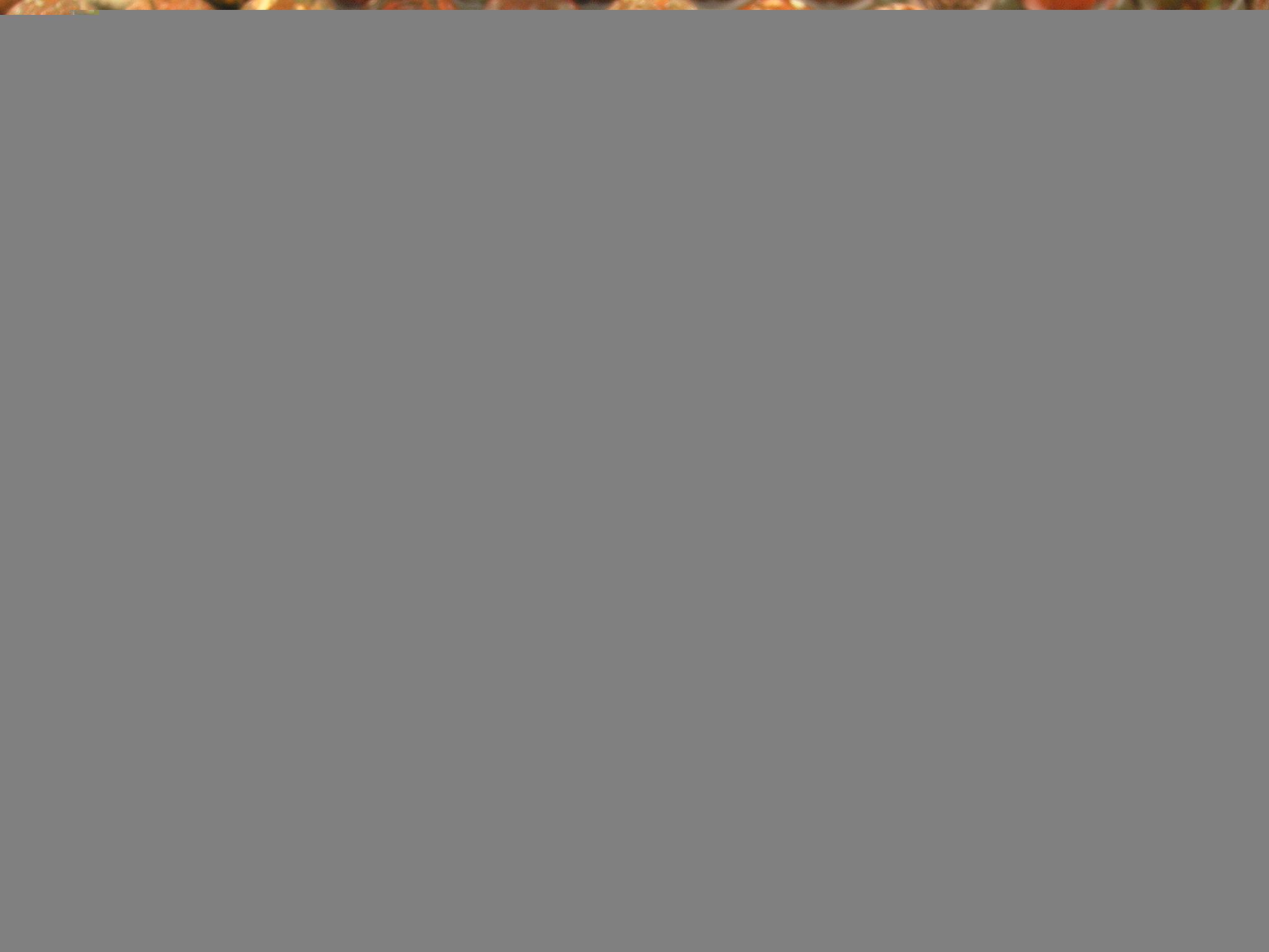 Нити бусин из яшмы маковой, шар гладкий 10мм (оптом)