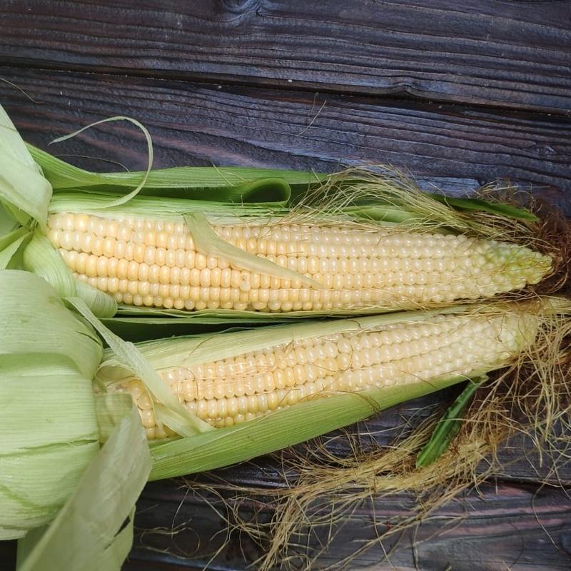 Фотография Кукуруза деревенская / 1 початок купить в магазине Афлора