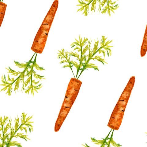 Морковки на белом фоне