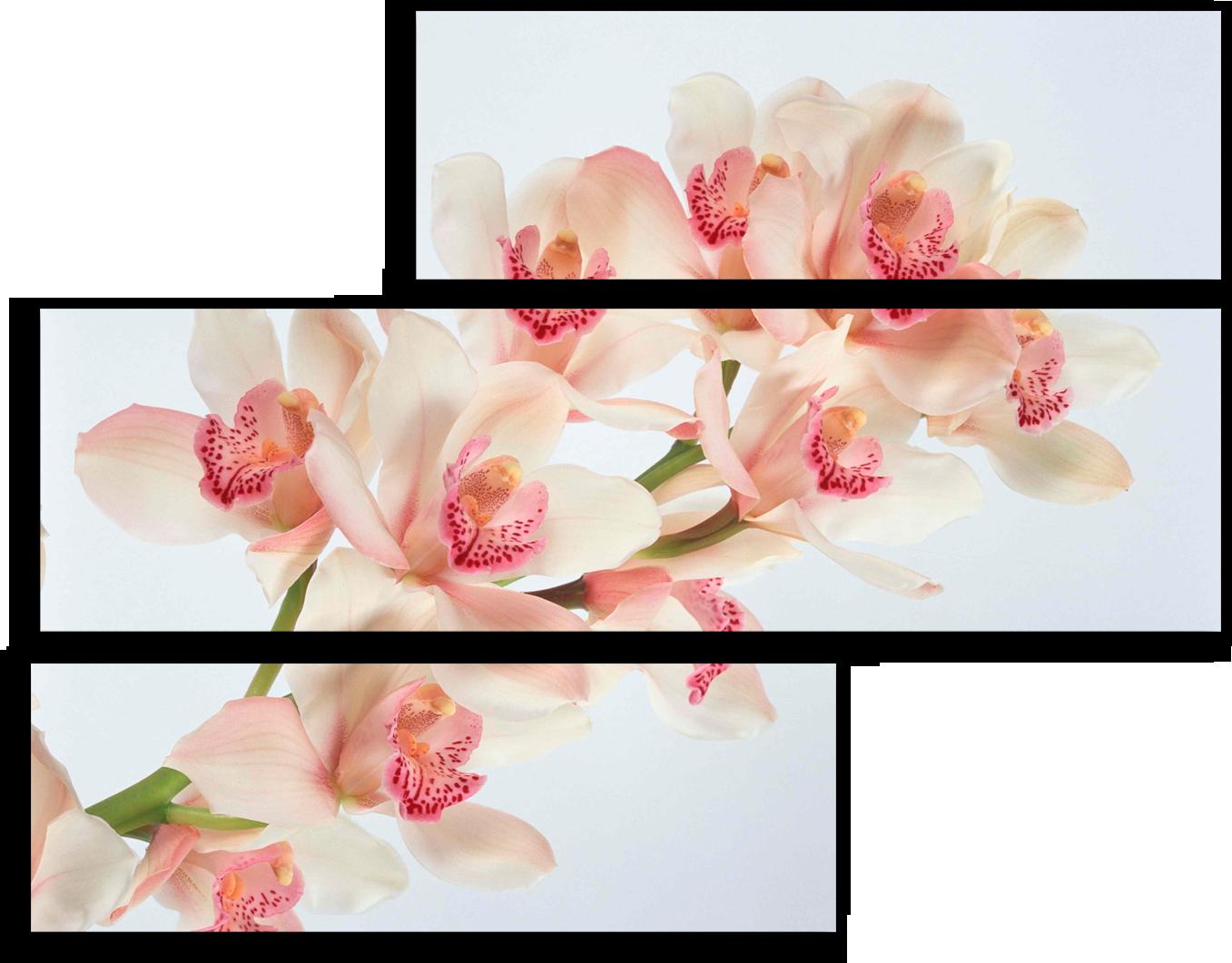 """Модульные картины Модульная картина """"Белоснежная орхидея"""" М13.png"""