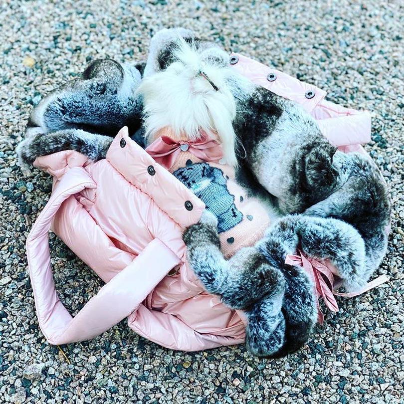 Дорогие сумки для собак
