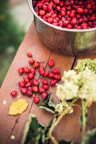 Шиповник таёжный, ягода сушёная