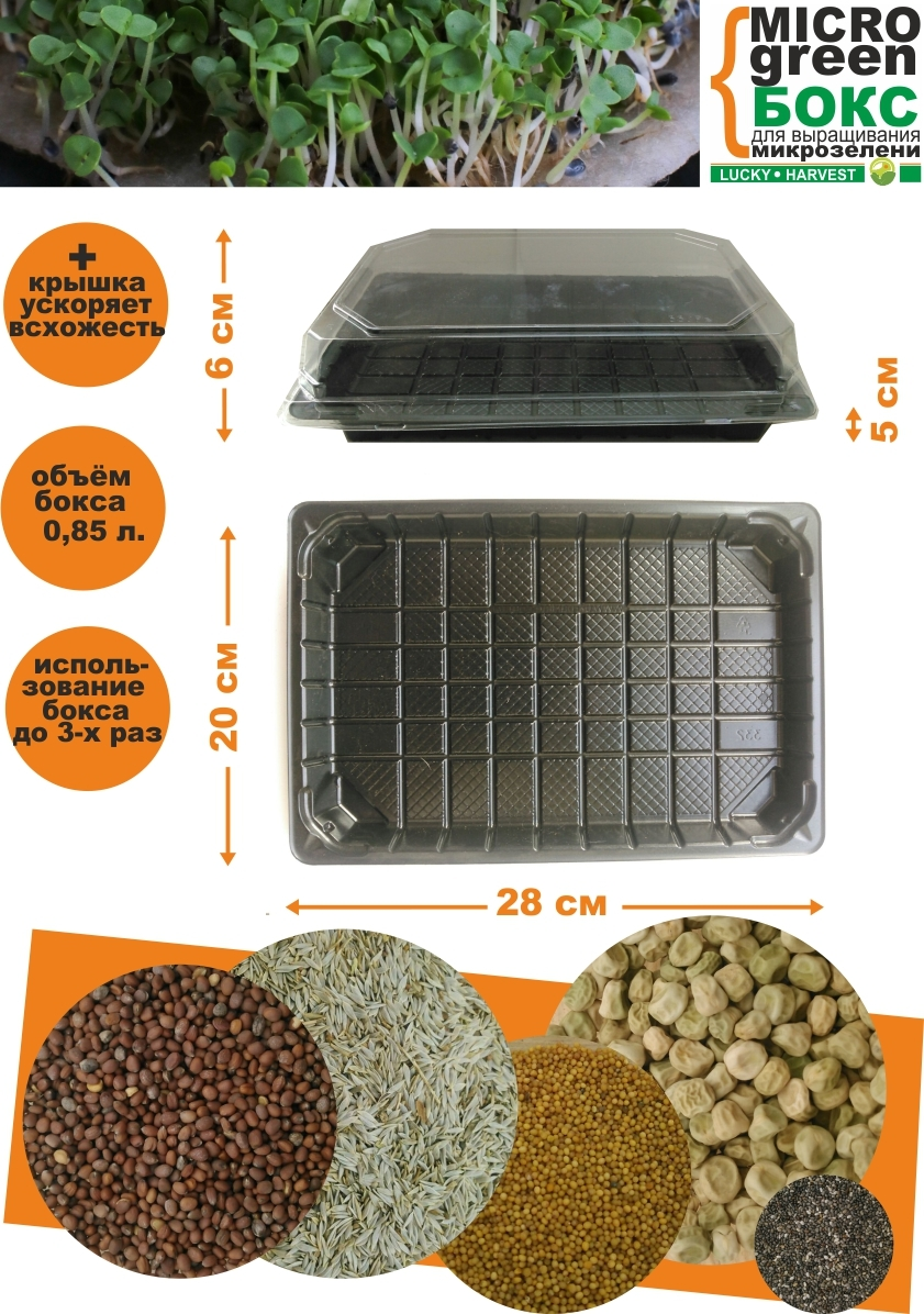 MICROGREEN BOX для выращивания микрозелени (28 см X 20 см) ТМ LUCKY HARVEST