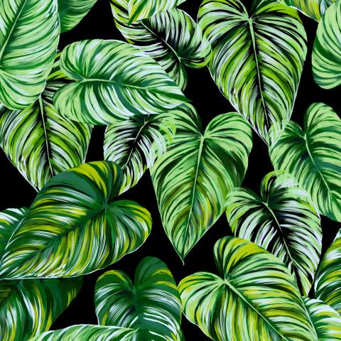 тропические листья_01