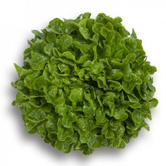 Гумбольд семена салата дуболистного (Rijk Zwaan / Райк Цваан)