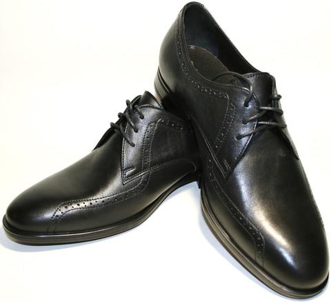 Туфли дерби мужские броги кожаные, черные Икос демисезонные
