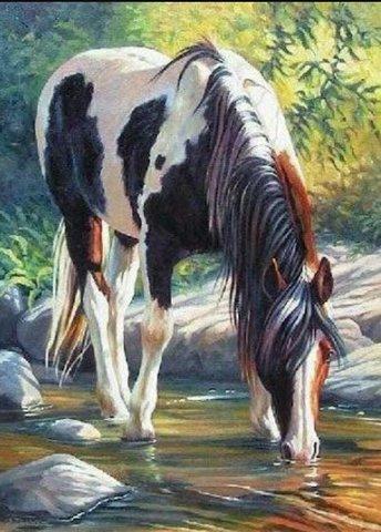 Картина раскраска по номерам 30x40 Черно-белая лошадь на водопое