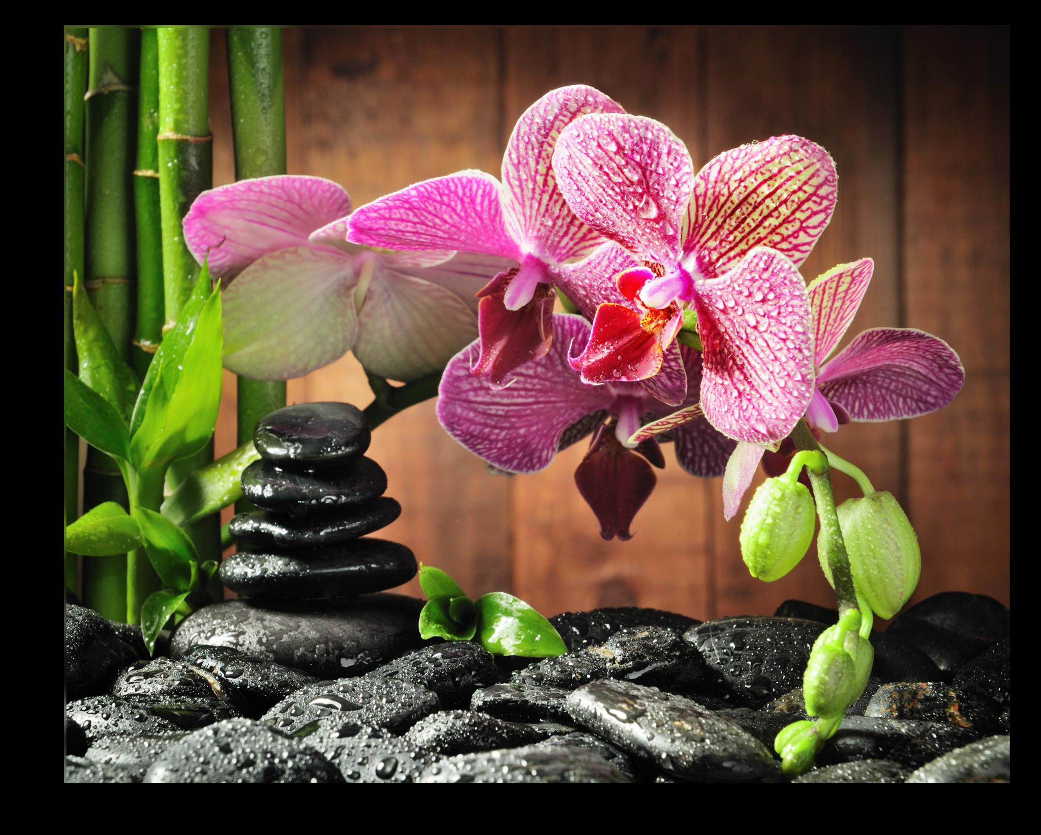 """Цветы Постер """"Орхидея"""" п9.png"""