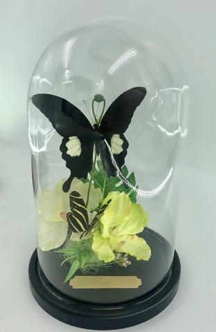 Яркая экзотика! Орходея, Птицекрылка с олскошным зеленым рисунком и Калликора с синим металлическим отливом на крыльях. Тропики и лето у вас в доме!