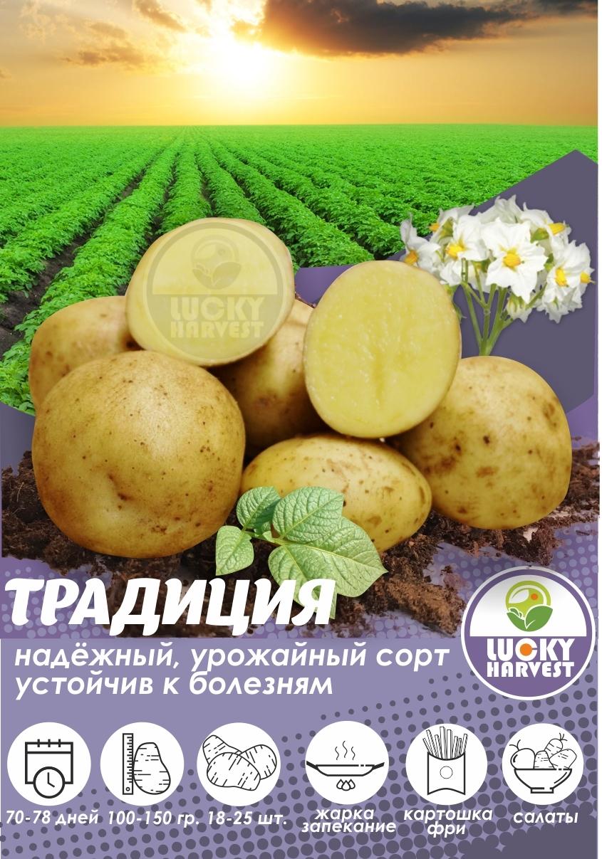 Семенной картофель  ТРАДИЦИЯ  ТМ LUCKY HARVEST