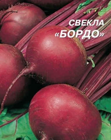 Семена Свекла Бордо 237