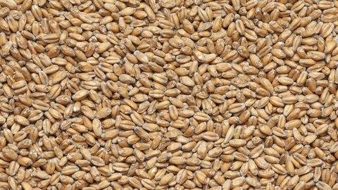 Солод пшеничный 25кг.