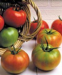 Ягуар F1 семена томата индетерминантного (Seminis / Семинис)
