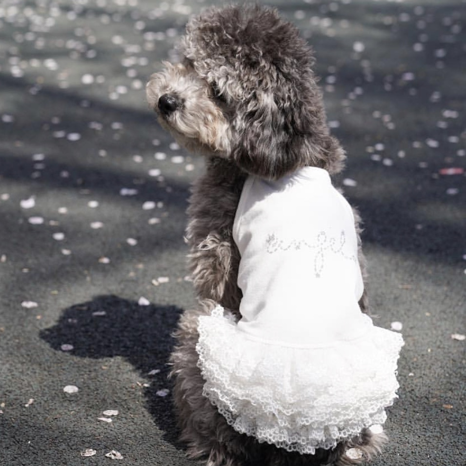 платья для собак мелких пород
