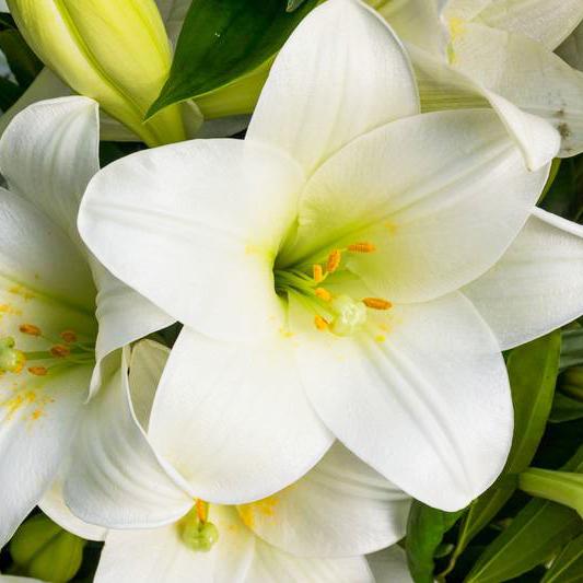 Купить букет белых лилий в Перми